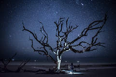 Starry Night on Driftwood Beach (Mark Wingfield) Tags: beach driftwood sun boneyard georgia jeckyll island outdoors outside nikon d750 2470 28 handheld atlantic ocean wood tree clouds sky orange water beautiful nature pretty outdoor plant long exposure lowlight low tripod iso
