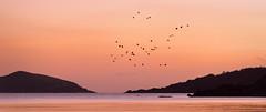 The Last Flight (TrotterFechan) Tags: rockcliffe hestan island bay seascape