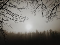 Casual Fog
