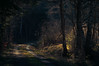 Last snowless Winter (Netsrak (on/off)) Tags: wald forst forest woods tree trees baum bäume light shadow licht schatten path way waldweg eifel meckenheim nordrheinwestfalen deutschland de