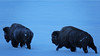 Cold Bison (DigitalSmith) Tags: tetons grandtetonnationalpark mountains wyoming