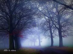 2017-01-08 allée du château(21)f (april-mo) Tags: fog brouillard mist misty foggy wood treesinfog winter bois secretwood alléeduchâteau trees arbres nature