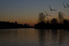 Sonnenuntergang (Anja-Photographie) Tags: natur kelsterbach main mainufer wasser sonnenuntergang