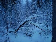 Deep Blue (salemsdaughter) Tags: snow blue night nightfall nightphotography nature alaska cold emotive forest woods trees