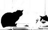 little man and Gandalf monochrome (PDKImages) Tags: cat black ragdoll monochrome pet animal feline blackcat asleep eyes calming
