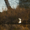 Another reflection (FileasFog) Tags: animaux nature wild reflet reflection certes arcachon lanton oiseau