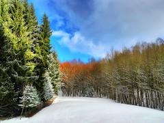 Bunter Winterwald (almresi1) Tags: schnee snow wood forest wald winter tannen welzheim eisenbachsee