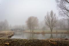 Beukenpark-18-1 (stevefge) Tags: beuningen mist nederland netherlands park gelderland water winter trees landscape nature nl natuur reflectyourworld reflections nederlandvandaag bridges