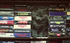 baby applejack (Azarah Eells) Tags: cat kitten baby babycat kitty meow catlady canon canon7d vhs vhscollection ragdoll ragdollkitten azaraheells kansas hutchinsonkansas hutchinson horrorvhs vhstapes