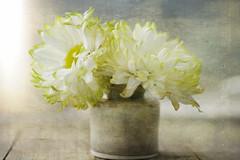 Flower Love 7DWF - Flora (jm atkinson) Tags: purple flora7dwf mum light ceramic vase window texture green fresh