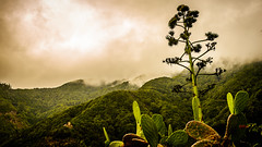 Día magnífico en Tenerife (pepoexpress - A few million thanks!) Tags: nikon nikond600 nikkor nikond610 d610 d61024120mmf4 24120mmafs people landscape bruma niebla tenerife canaryislands nature clouds cloudssea mardenubes paisaje