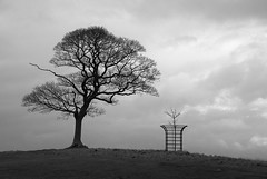 Old and New (graemes83) Tags: pentax singlein clouds grey bleak nationaltrust lymepark cheshire tree cage