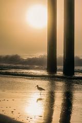 Alabama Foggy Morning  1 (johnmcgrawphotography) Tags: beach beachsunrise fioggy foggymorning gulfofmexico johnmcgraw johnmcgrawphotography morning morningphotography morningpier ocean orangebeach photography pier sunrise sunriseatbeach travel travelphotography