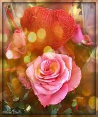Rosa y Coraz㊉n (ℝakel_ℰlke ﴾͡๏̯͡๏﴿) Tags: rakel raquel elke rakelelke raquelelke rakelmurcia regióndemurcia murcianorte espinardo murcia españa spain espagne europa europe flower fleur fiore blumen кветка květina cvjetni kvetina floro lill lore kukka blodau λουλούδι פרח फूल paj bloem virág bunga blóm フラワー zieds žiedas цвет kwiat floare цветок blomma çiçek квітка hoa nikon nikond300s d300s nikkor18–200 objetivo18200mm