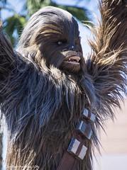 Hero's Roar (jbwolffiv) Tags: chewbacca chewie starwars galaxyfarfaraway disneyshollywoodstudios hollywoodstudios disney disneyworld disneywdw d7200 wdw waltdisneyworld wolff johnwolff nikon