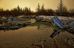 2016 Stump Spring Banff (John Andersen (JPAndersen images)) Tags: banff night springs stumps vermillionlakes