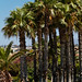2012-07-04_Crete_002270