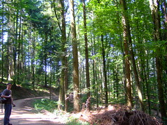 DSCF0831 (JohnSeb) Tags: trees tree forest germany deutschland rboles bosque arbre schwarzwald baum fort badenweiler johnseb bumen eurotour2012