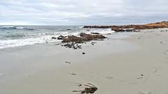 California-06593 -  Asilomar State Beach (archer10 (Dennis) 159M Views) Tags: california usa sony unitedstatesofamerica free dennis jarvis pacificgrove asilomarstatebeach pointpinos iamcanadian freepicture dennisjarvis archer10 dennisgjarvis