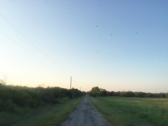 The Road Ahead. Day 165. Cemetery Rd in Riviera, TX. Had a good full day of walking yesterday but was on Rt 77 and the traffic was pretty loud. Should be a quieter day today. #TheWorldWalk #travel #texas #wwtheroadahead