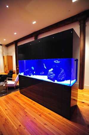 300 gal. SW Fish Only Display - Private Residence - NYC