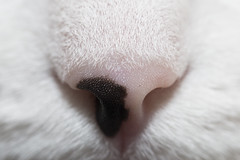 Sniff test (Carbon Arc) Tags: macro face cat nose triangle nasal triangular