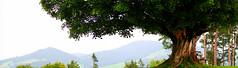 Der Herbst ist da!  E-M5 MII  Panorama (Swiss.piton (B H & S C)) Tags: tree green tourism schweiz ostschweiz grn baum toggenburg zd myswitzerland justmeandmycamera travelerphotos awesometrees zuikolenses ibringmycameraeverywhere microfourthird derherbstistda olympus45mmf18microfourthirdslens swissamateurphotographers schweizerphotographen olympusomdem5ii em5mk2 inlovewithswitzerland imageswithimpact