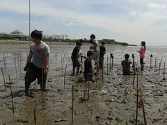 10.12.2015-AngloSingapore-BangPu-100 trees (19) (pattfoundation2014) Tags: thailand education mangrove treeplanting bangpu pattfoundation anglosingapore