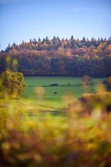 (3dchris89) Tags: wood uk chris autumn sunset england fall colors season haze nikon afternoon seasons 85mm surrey christian d750 hazy chantry bense chris89 3dchris89