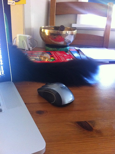 Leave the mouse alone