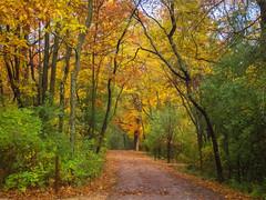 10.24.2015 Pinewoods (Kristine Runner) Tags: fallcolor pinewoods smugmugcountryroads 2015sale