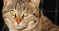 (66Colpi) Tags: portrait verde cat piano occhi primo ritratto luce umido micio micetta nasino tigrato
