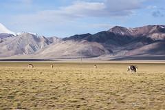 CYM_8407 (nature1970613) Tags: china tibet