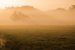 Foggy morning on Lakeland