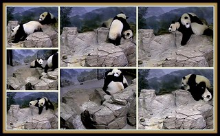 Bei wants mom's attention