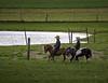Amish boys riding Shetland Ponies in Pennsylvania (crabsandbeer (Kevin Moore)) Tags: fall winter amish drive pa pennsylvania roadtrip rural amishcountry lancaster boys horse shetlandponies shetlandpony timeless littlehorses mennonite cute youth people candid