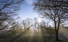 Winter (Dee Em H) Tags: landscape uk sussex nikon frost sunlight