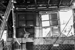 Janelas (Bruno Nogueirão) Tags: street streetphotography streetphotographer streetphoto rua fotografiaderua fotografiadocumental skull janela window garagem garage