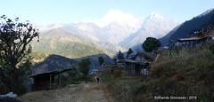 P1100967 Looking back towards Landruk as we start todays trek to Pothana via Tolga and Pitam-Deorali (ks_bluechip) Tags: nepal trek dec2016 annapurna abc mbc landruk tolga pitamdeorali pothana