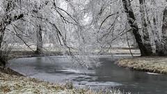 Parc du château de Rambouillet (HellAir) Tags: parcduchâteauderambouillet 2016 rambouillet frozen givre hiver winter