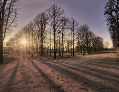Winter sun (StephanieB.) Tags: winter hivers sun soleil arbres tree shadows ombres lumières rayrayons tuileries paris france paysage froid cold flare exterieur outside route extérieur jardin garden hiver