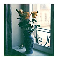 roses d'hiver à la fenêtre (JJ_REY) Tags: roses fenêtre window hiver winter colors impossibleproject colors600 pioneergen30 polaroidback405 toyofield45a rodenstock sironarn150mmf56 colmar alsace france