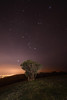 A lonely tree (NHorton) Tags: tree stars hill south downs canon full frame long exposure tripod remote release canon6d 6d canonlseries pro national park outstanding natural beauty star trails light pollution town cityscape nightscape landscape nature worl world shutter foliage plant