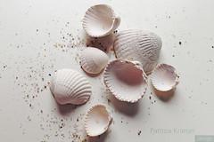 Muscheln · Shells