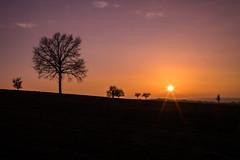 Une belle journée s'achève... (regisfiacre) Tags: coucher soleil sunset sundown dusk soir soirée sonne jour tag day sky ciel himmel ombres chinoises arbre tree france moselle wiesviller