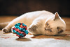 Heidi Playing Crinkle Ball (Feng Wei Photography) Tags: playful nopeople pets whisker kitten domesticanimals animalthemes indoors britishshorthair beautiful adorable lilac horizontal uk portrait lifestyles england femaleanimal focusonforeground cat colorimage crinkleball animal lyingdown domesticcat looking livingroom purebredcat feline cute selectivefocus britishculture shorthaircat oneanimal bellevue washington unitedstates us