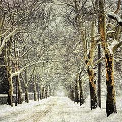 Charlotte Street (alamme) Tags: winter snow street canandaigua ny upstate trees fingerlakes