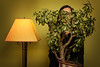 (~ cynthiak ~) Tags: 2017 365 365days 3652017 26365 january january2017 img4390 selfportrait werehere hereios rhyme rhyming jade shade jadeplant lampshade rhymingphotography