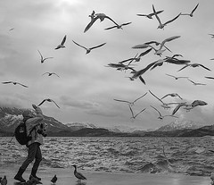 (Magdalena Roeseler) Tags: birds street streetphotography candid lake seagull people bw blackandwhite monochrome olympus zuiko12mm