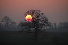 Violett & Orange (Elbmaedchen) Tags: sonnenuntergang bäume silhouette abendhimmel dunst